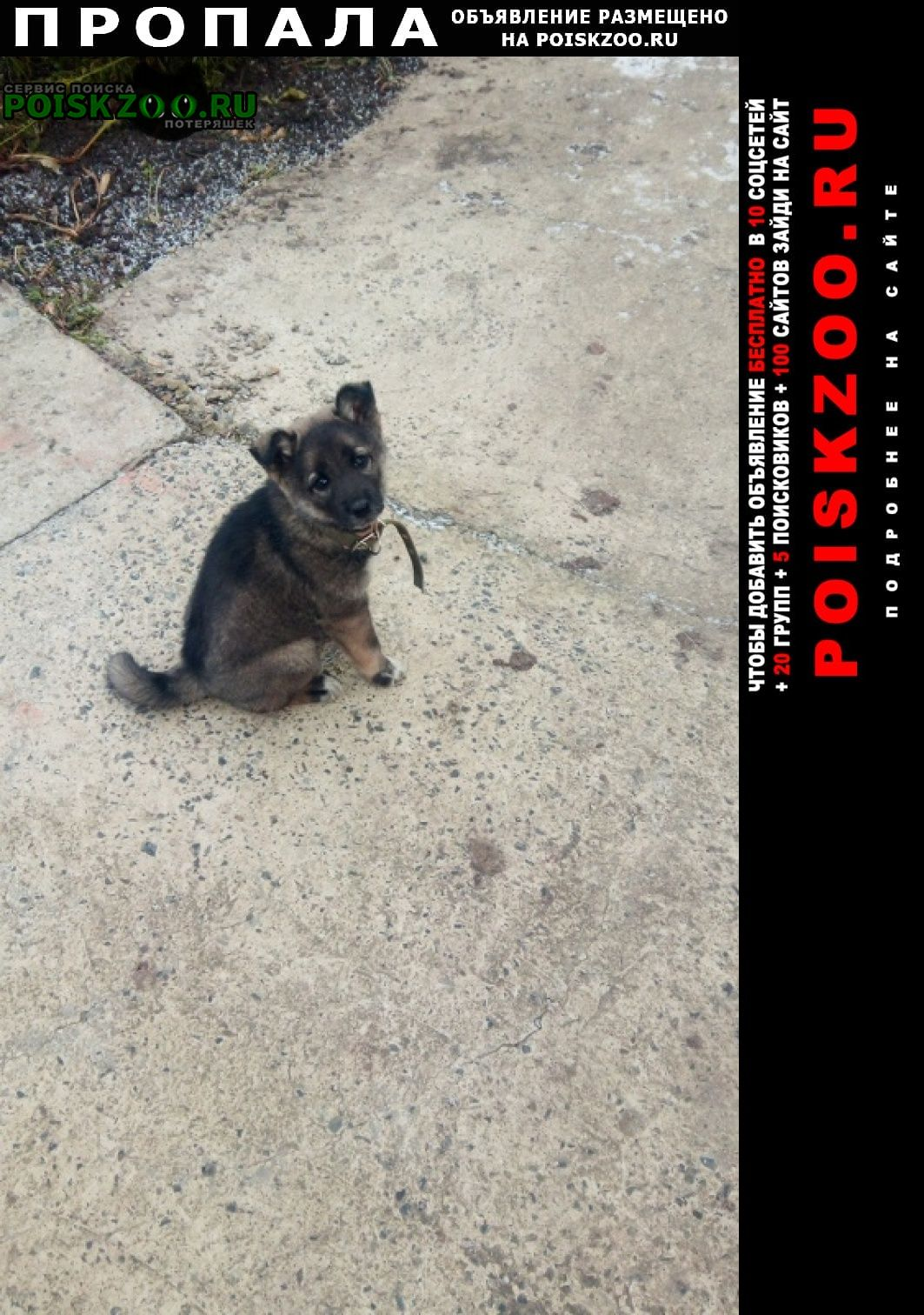 Пропала собака красновка Кемерово