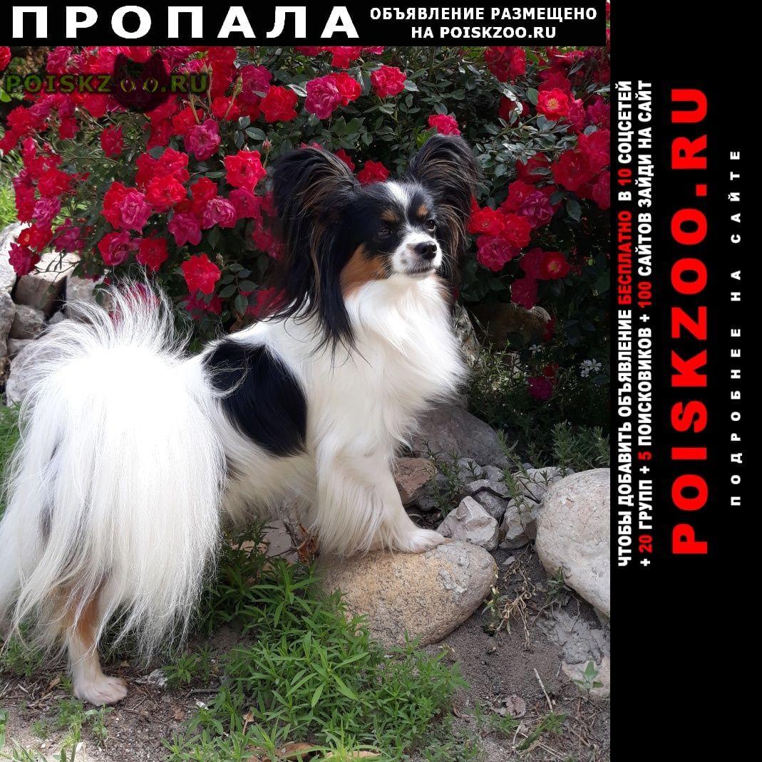 Пропала собака вознаграждение 50 000 руб г.Симферополь