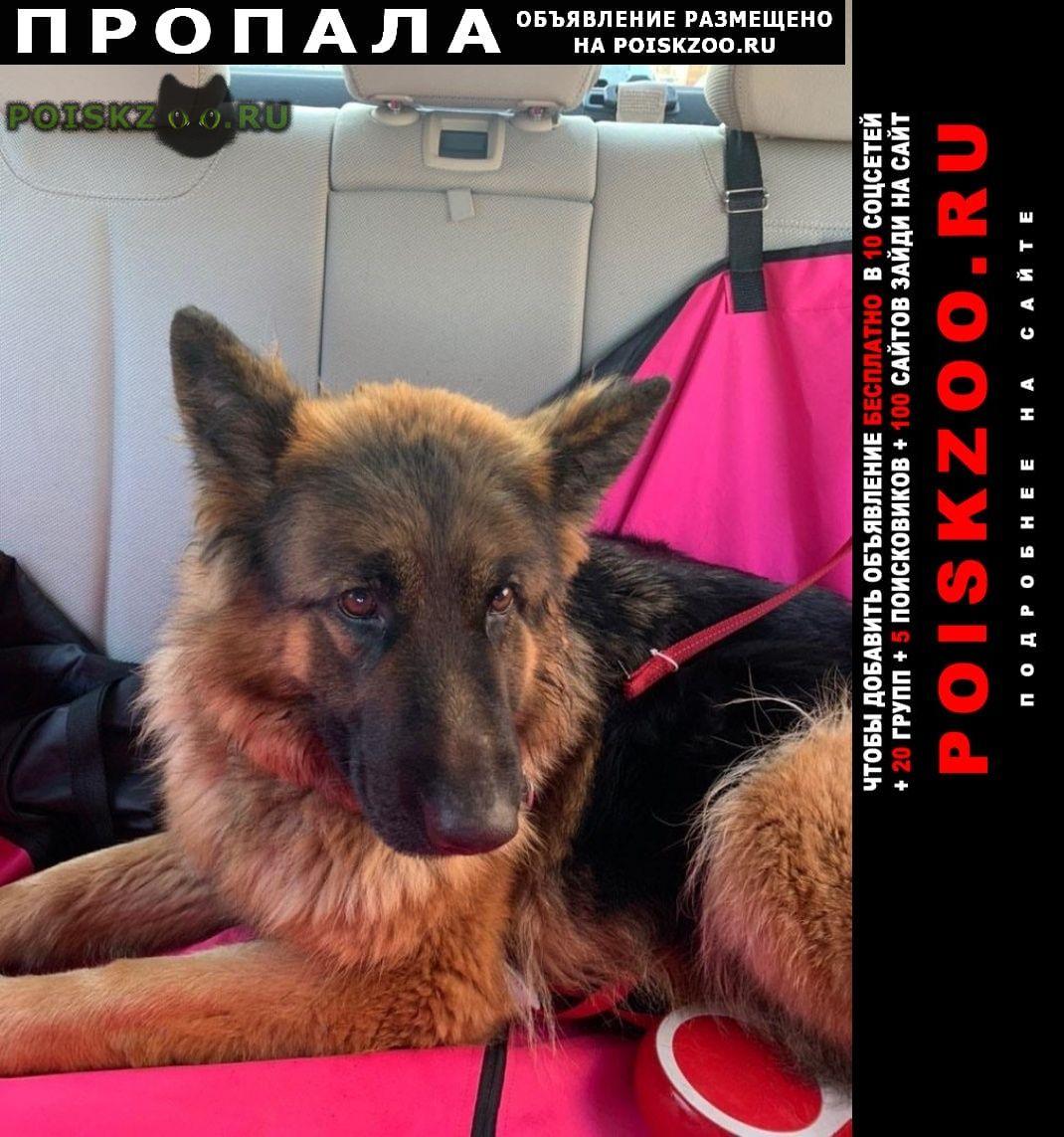 Пропала собака мкр Дзержинский