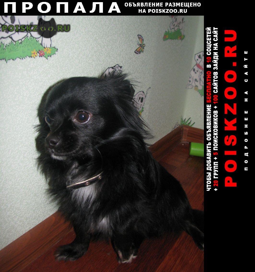Пропала собака кобель черная в яковлевском райо г.Белгород