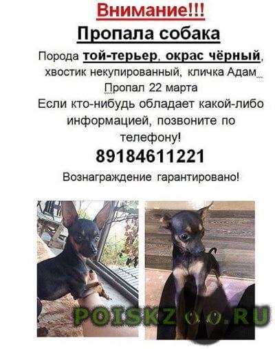 Пропала собака кобель г.Новороссийск