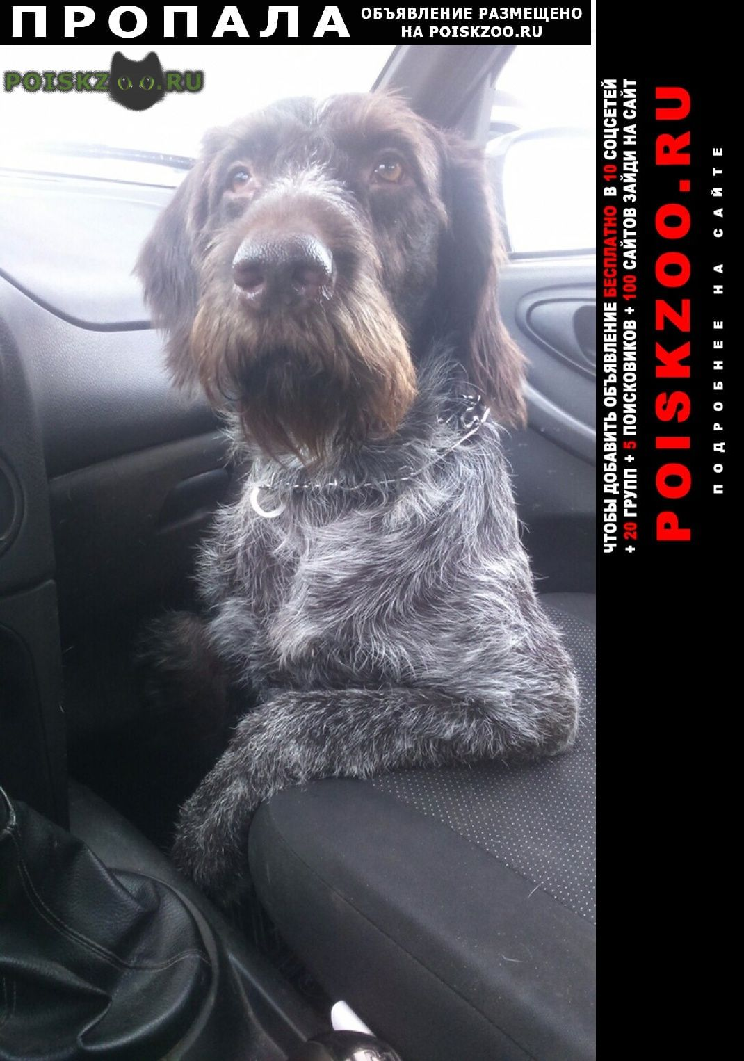 Пропала собака кобель дратхаар г.Бабынино
