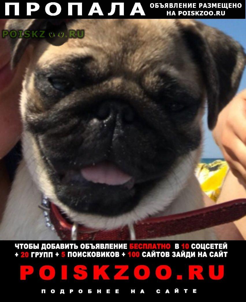 Пропала собака помогите найти члена семьи.. Гвардейское Крым