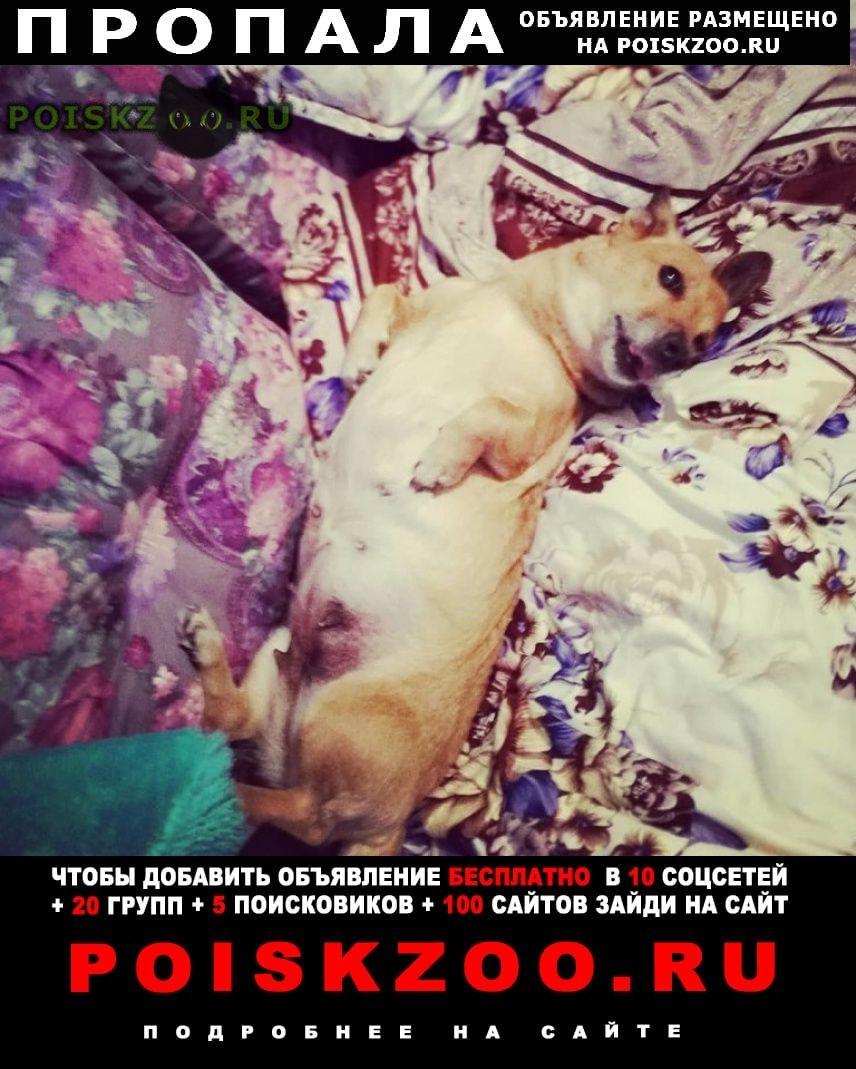 Пропала собака если кто видел, или приютил, отзовитесь г.Хабаровск