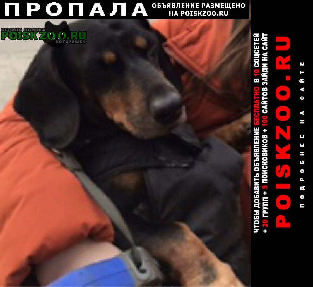 Пропала собака кобель 5 марта 2021г. район нахичевань Ростов-на-Дону