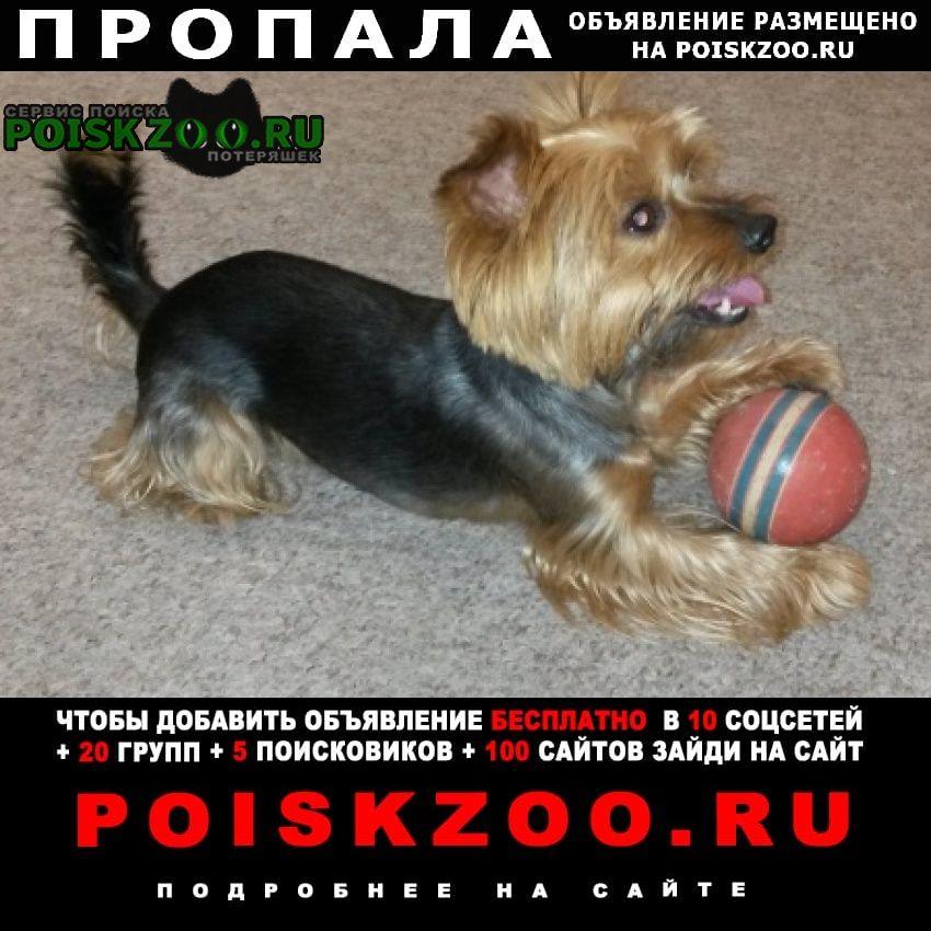 Пропала собака кобель йоркширский терьер Абакан Хакасия