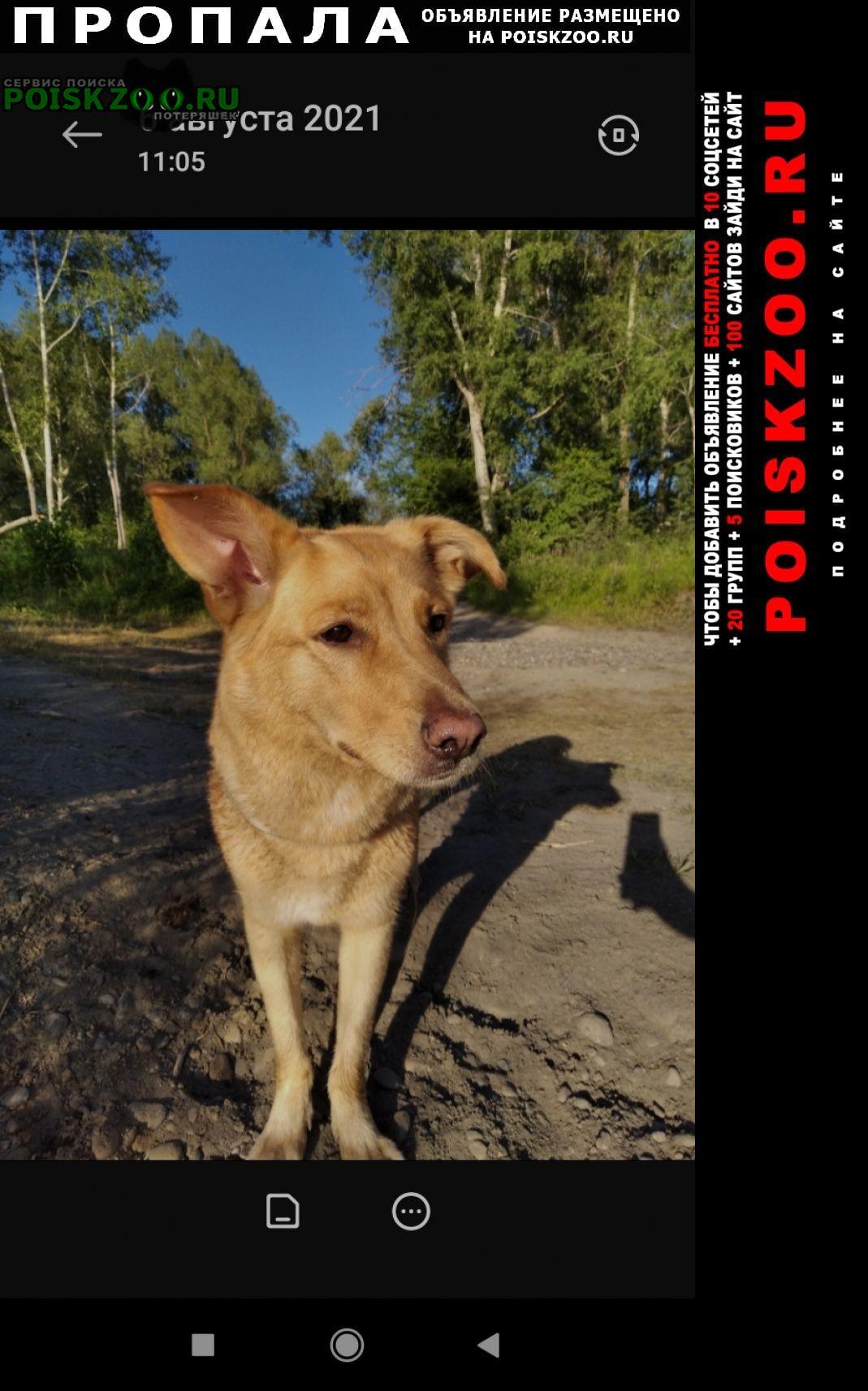 Пропала собака Бийск