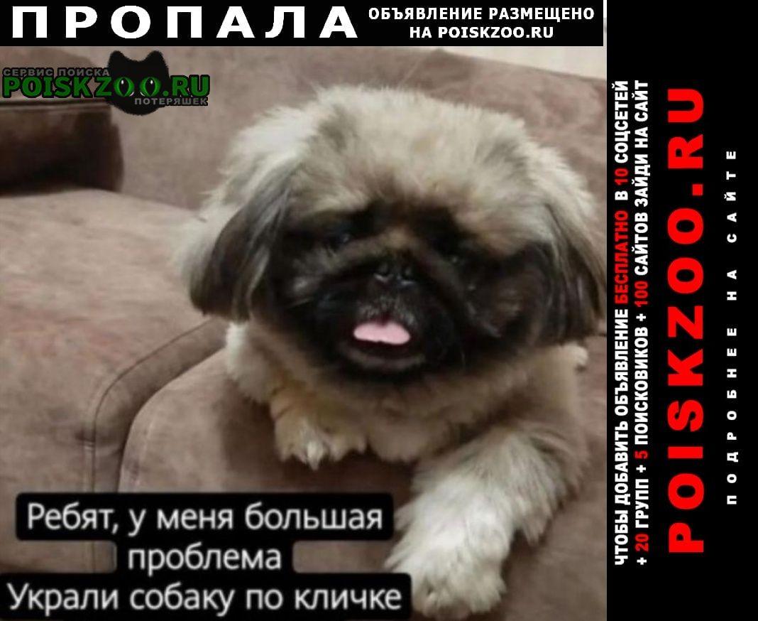 Пропала собака кобель королевский пекинес. Бобруйск