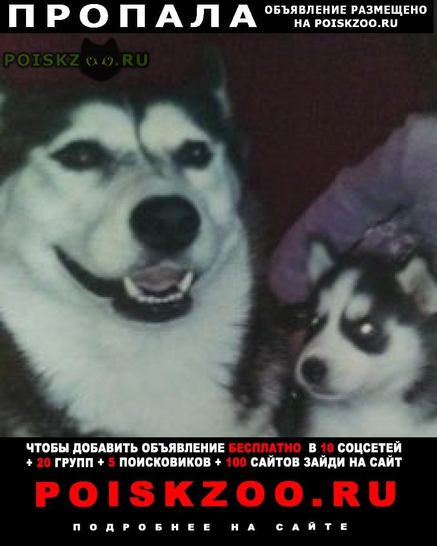 Пропала собака 2 года назад г.Волгодонск