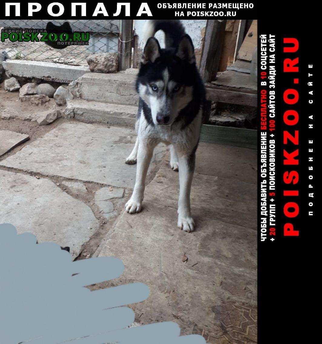 Пропала собака кобель помогите найти нашего верного друга Астрахань