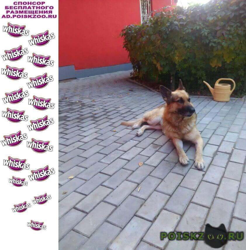 Пропала собака кобель тихон г.Львовский