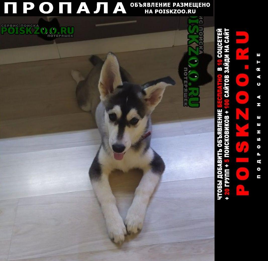 Москва Пропала собака щенок хаски