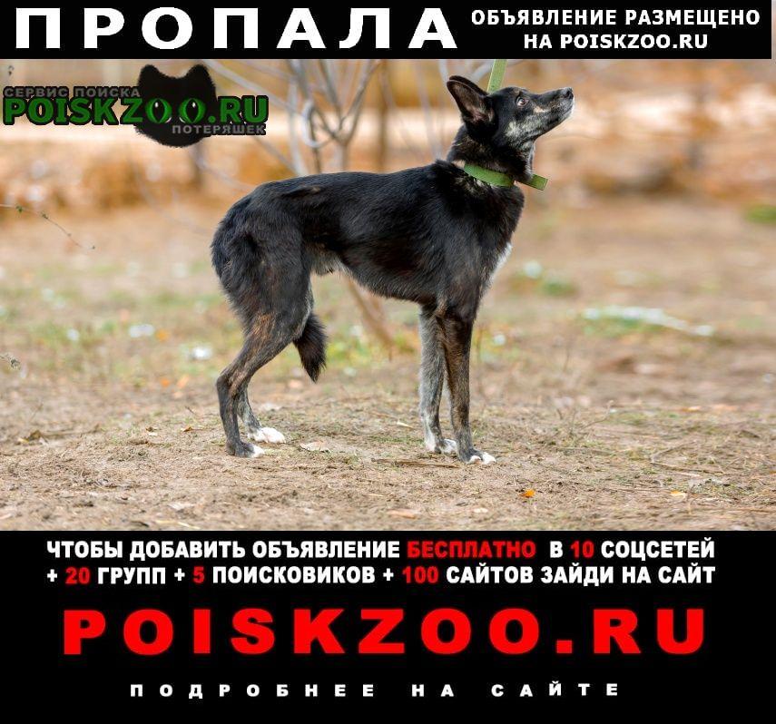 Пропала собака кобель черный антошка Москва