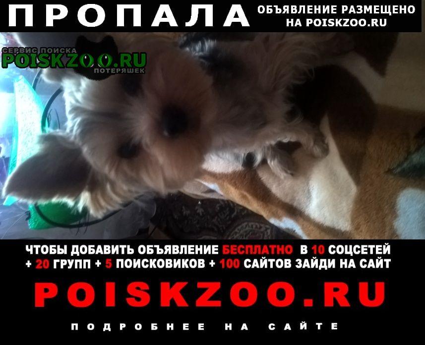 Пропала собака кобель г.Волжский (Волгоградская обл.)