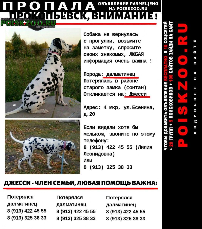 Пропала собака помогите найти г.Прокопьевск