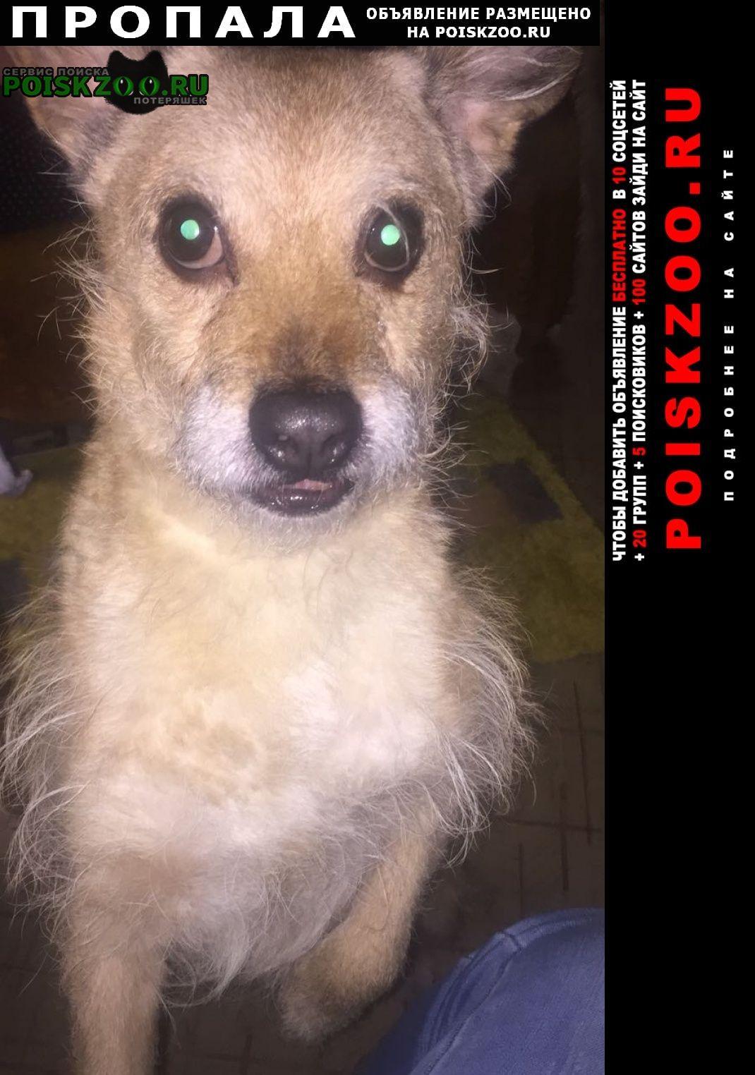 Пропала собака кобель брюс.. в люблино г.Москва