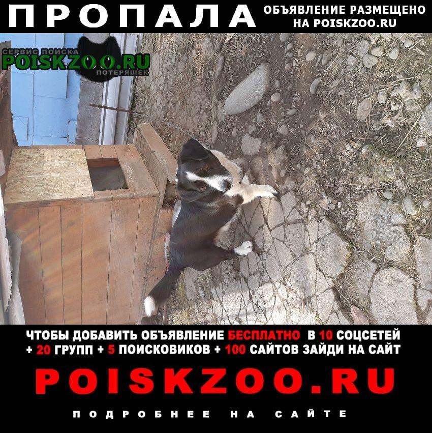 Пропала собака кобель г.Черкесск Карачаево-Черкесская Республика