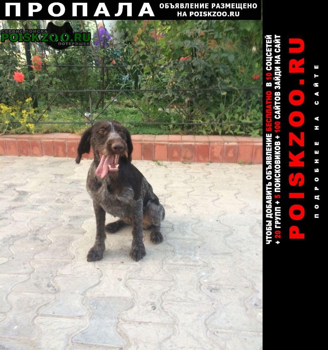 Пропала собака в посёлке сукко г.Анапа