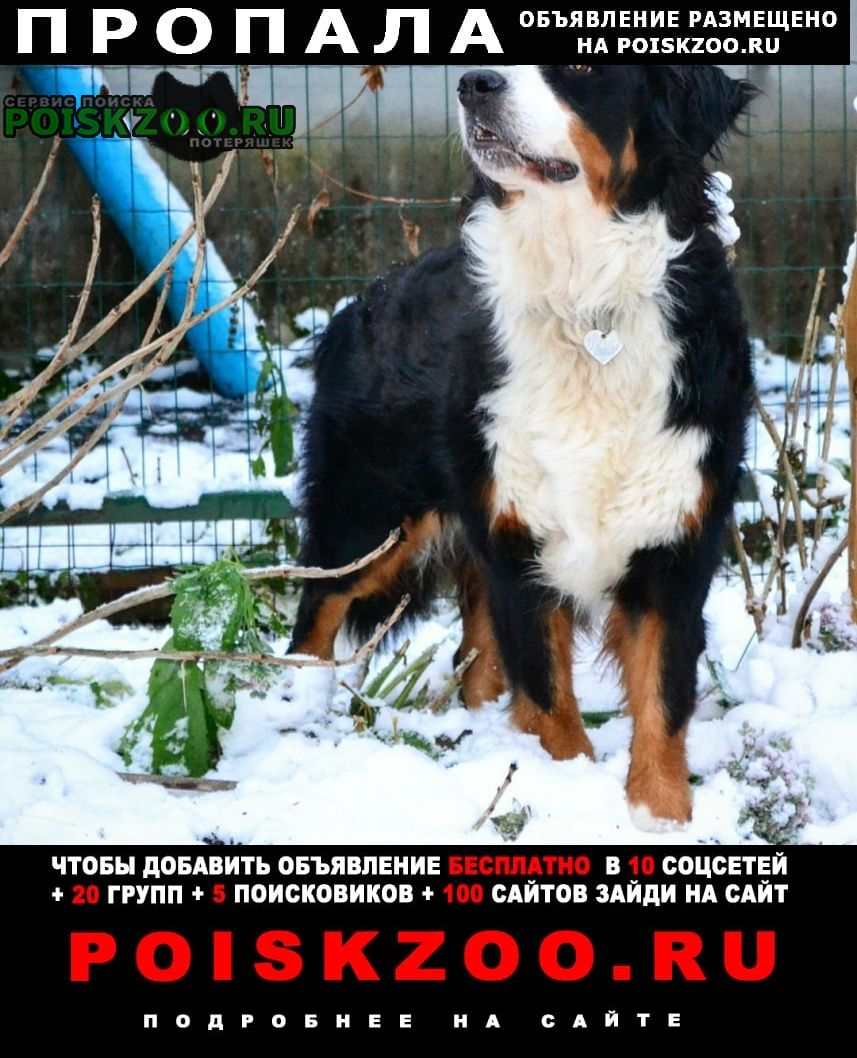 Пропала собака г.Софрино
