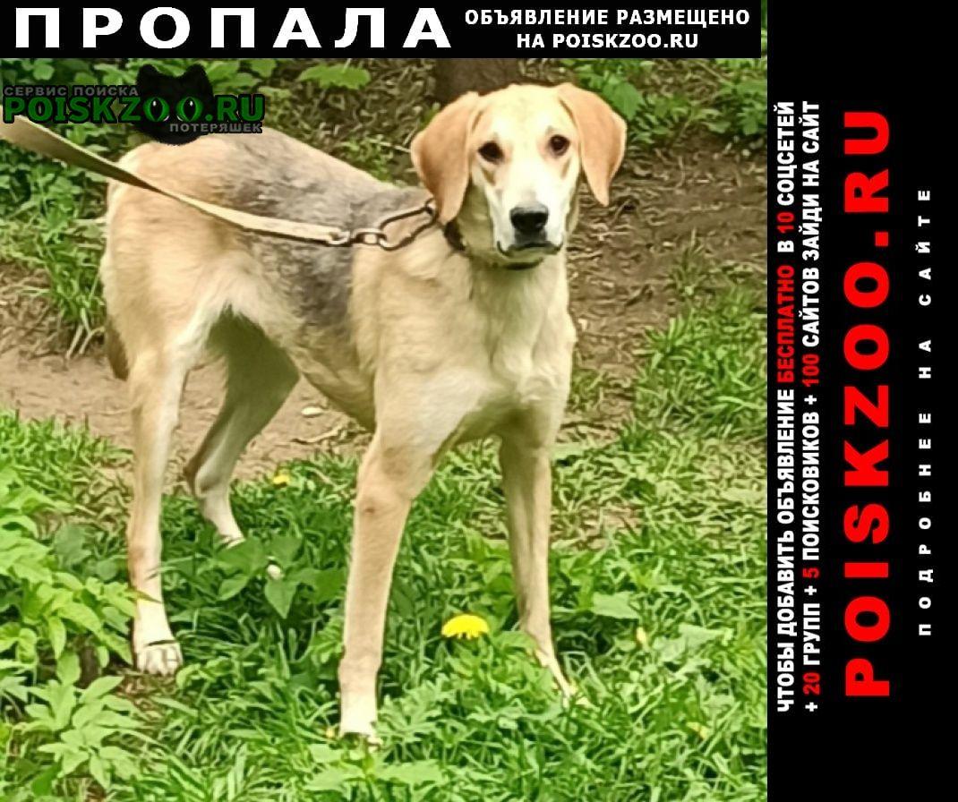 Пропала собака потерялась гончая г.Красногорск