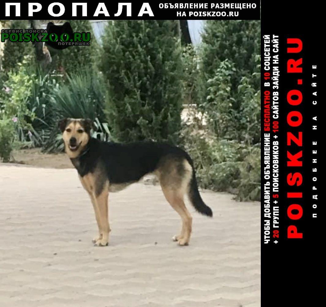 Пропала собака г.Ростов-на-Дону