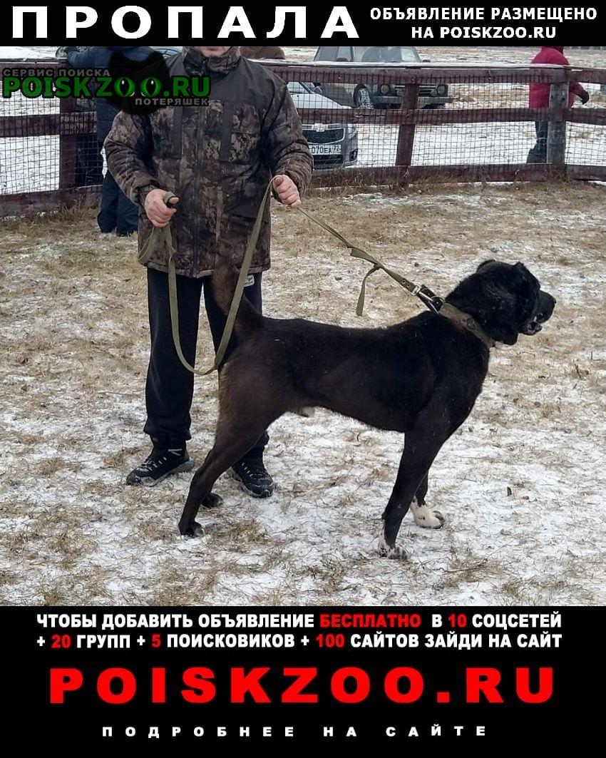 Пропала собака кобель г.Любинский