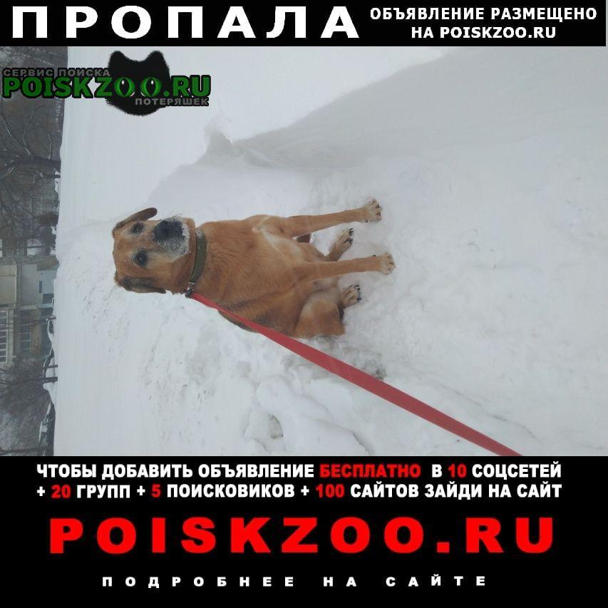 Пропала собака кобель Троицк