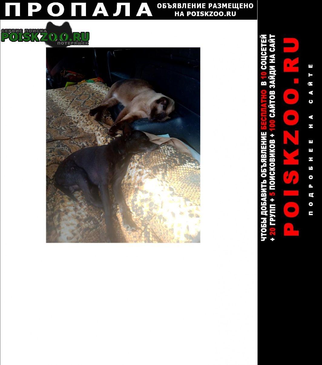 Пропала собака кобель той терьер размером с кошку Москва