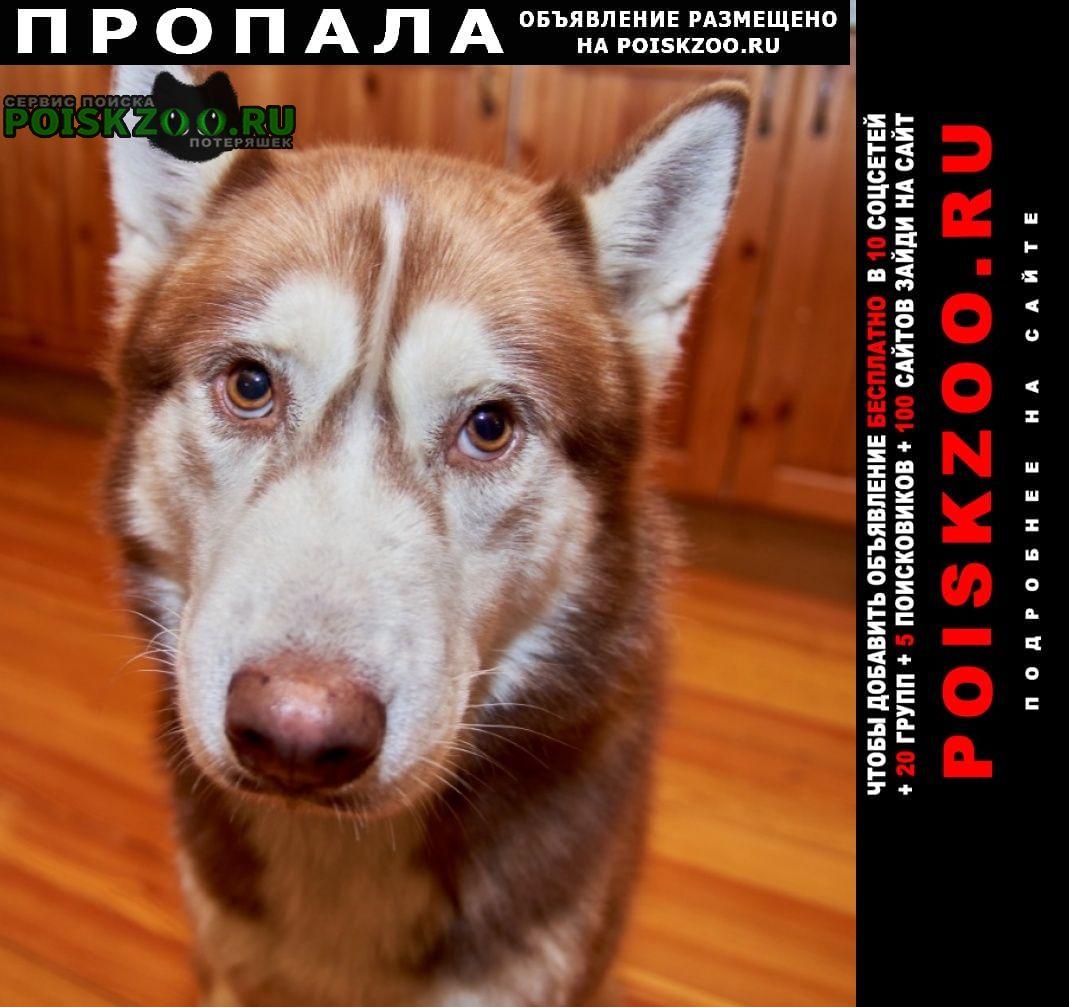Пропала собака кобель Алабино