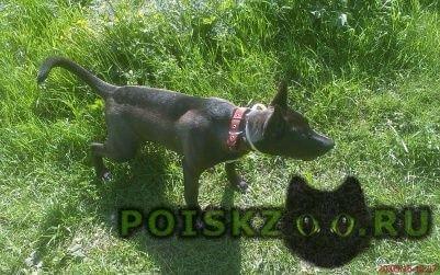 Пропала собака кобель возможно он в желтовке в деревне г.Воронеж