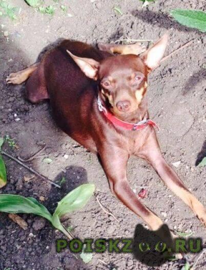 Пропала собака г.Симферополь