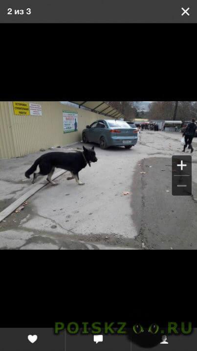 Пропала собака внимание розыск  г.Новороссийск