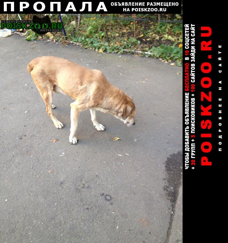 Пропала собака больной пес Шатура