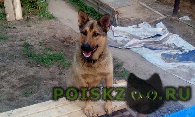 Пропала собака кобель г.Томилино