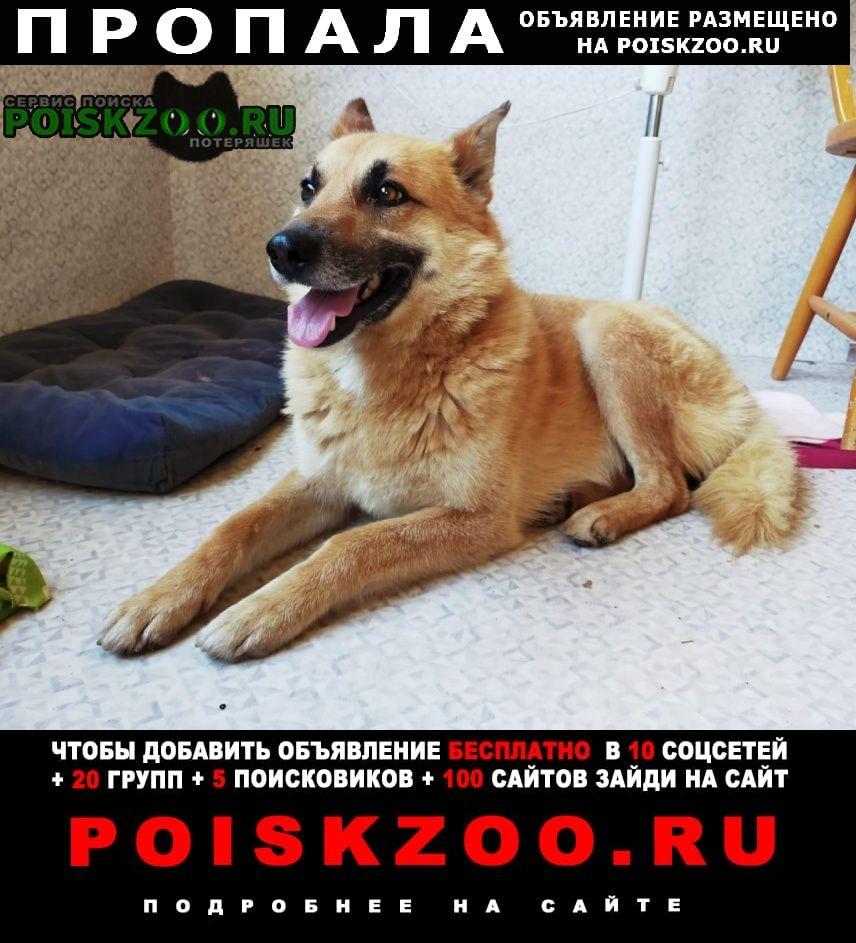 Пропала собака кобель Владимир