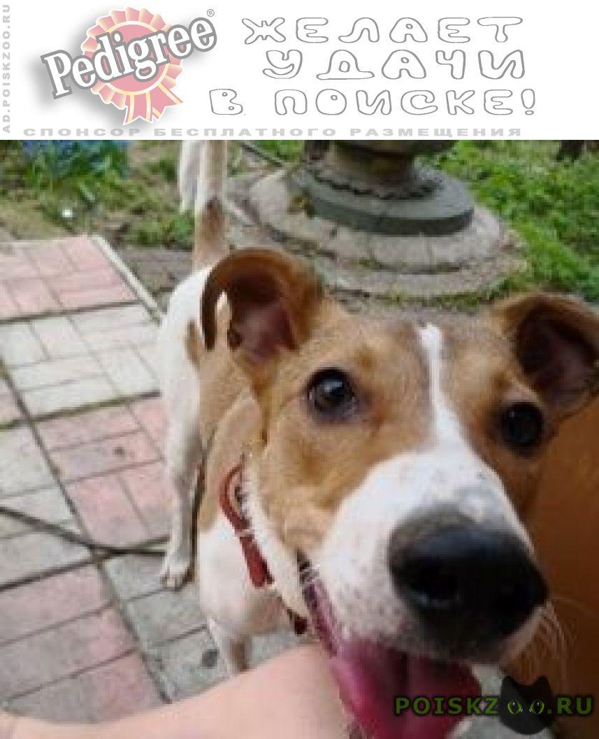 Пропала собака черкизово г.Пушкино