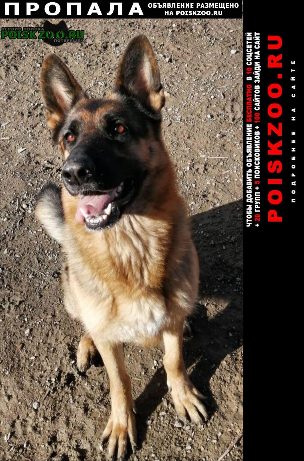 Пропала собака Кольчугино