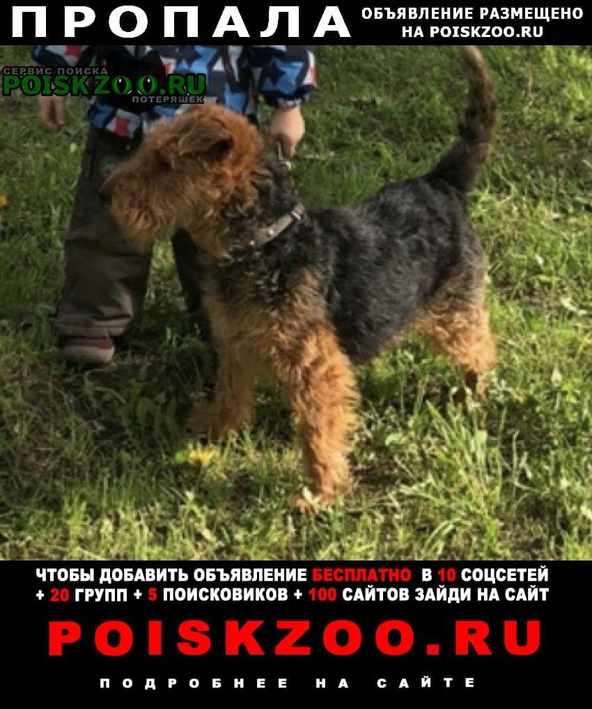 Пропала собака вельштерьер Ярославль
