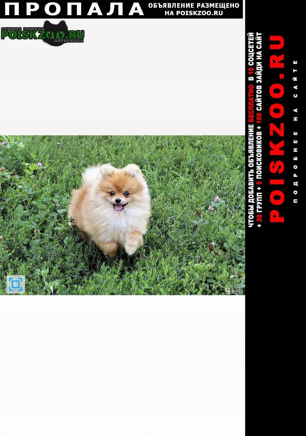 Пропала собака кобель Тамбов