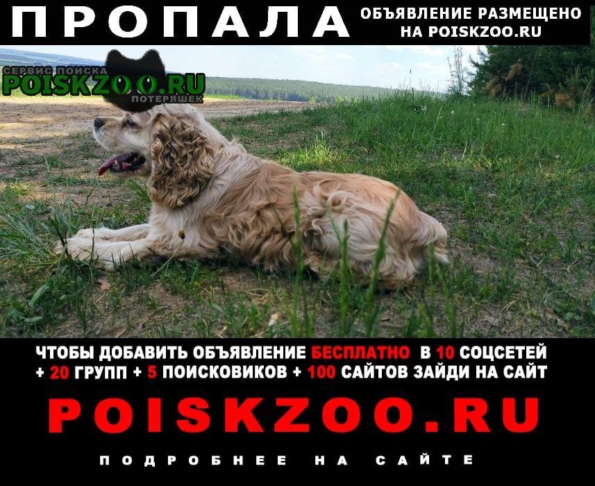 Пропала собака Арамиль