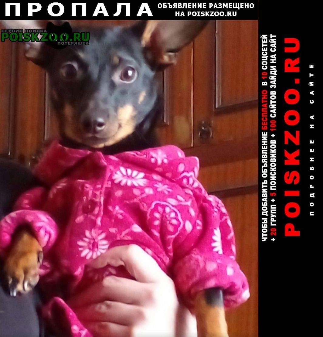 Пропала собака потерялась собачка Рубцовск