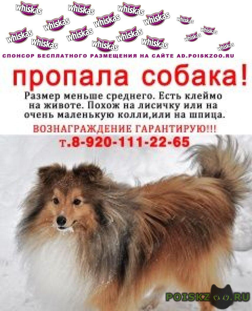 Пропала собака кобель г.Выкса