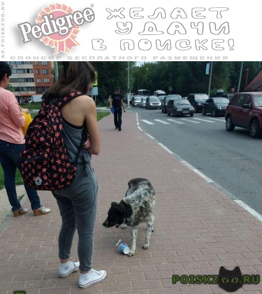 Пропала собака кобель кто потерял собаку г.Чехов