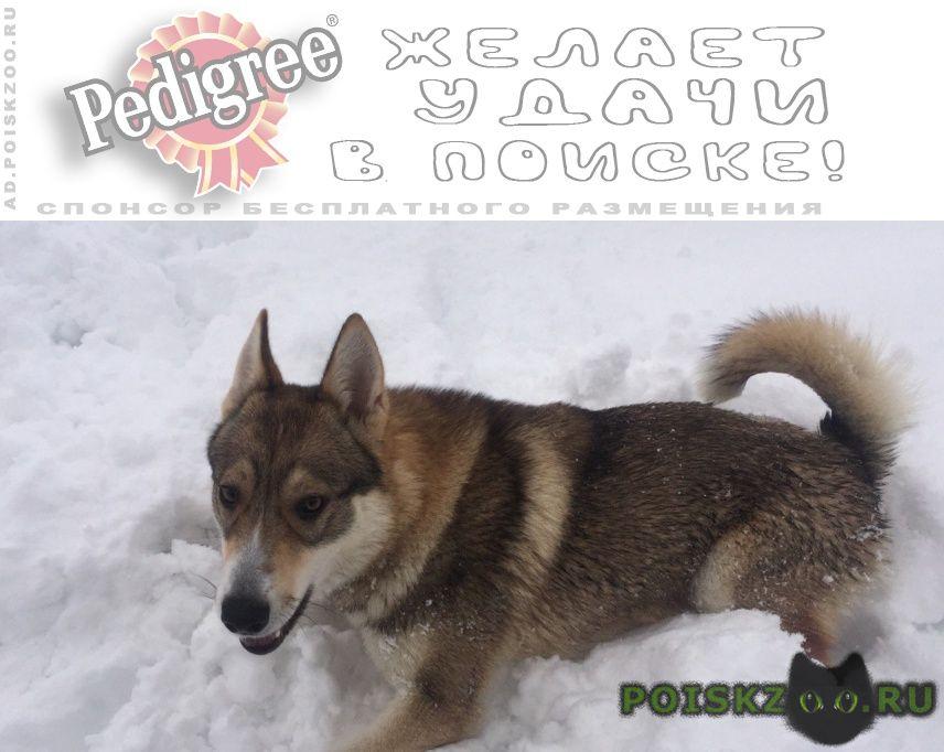 Пропала собака потерялась любимая г.Брянск