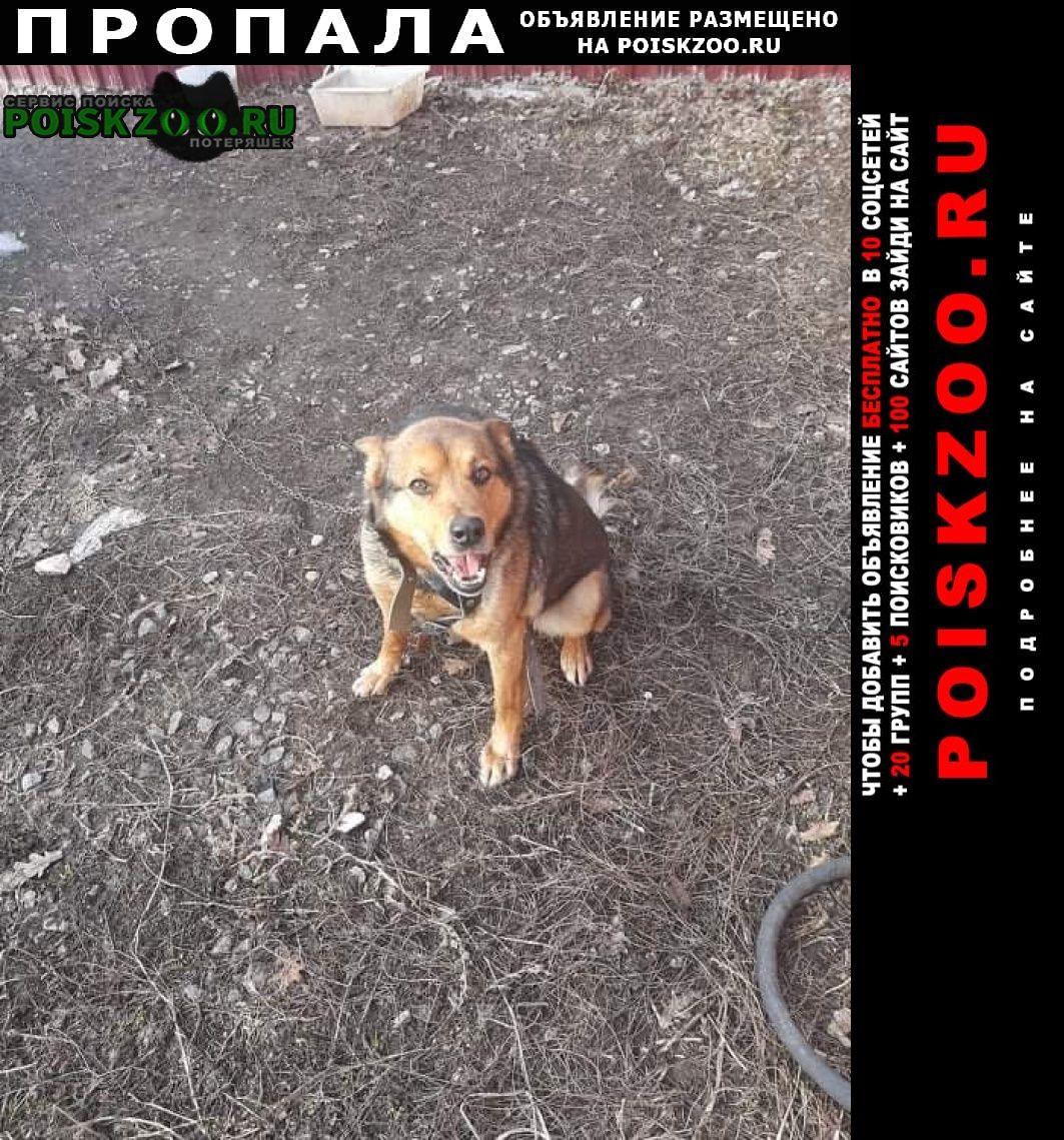 Пропала собака кобель Рязань