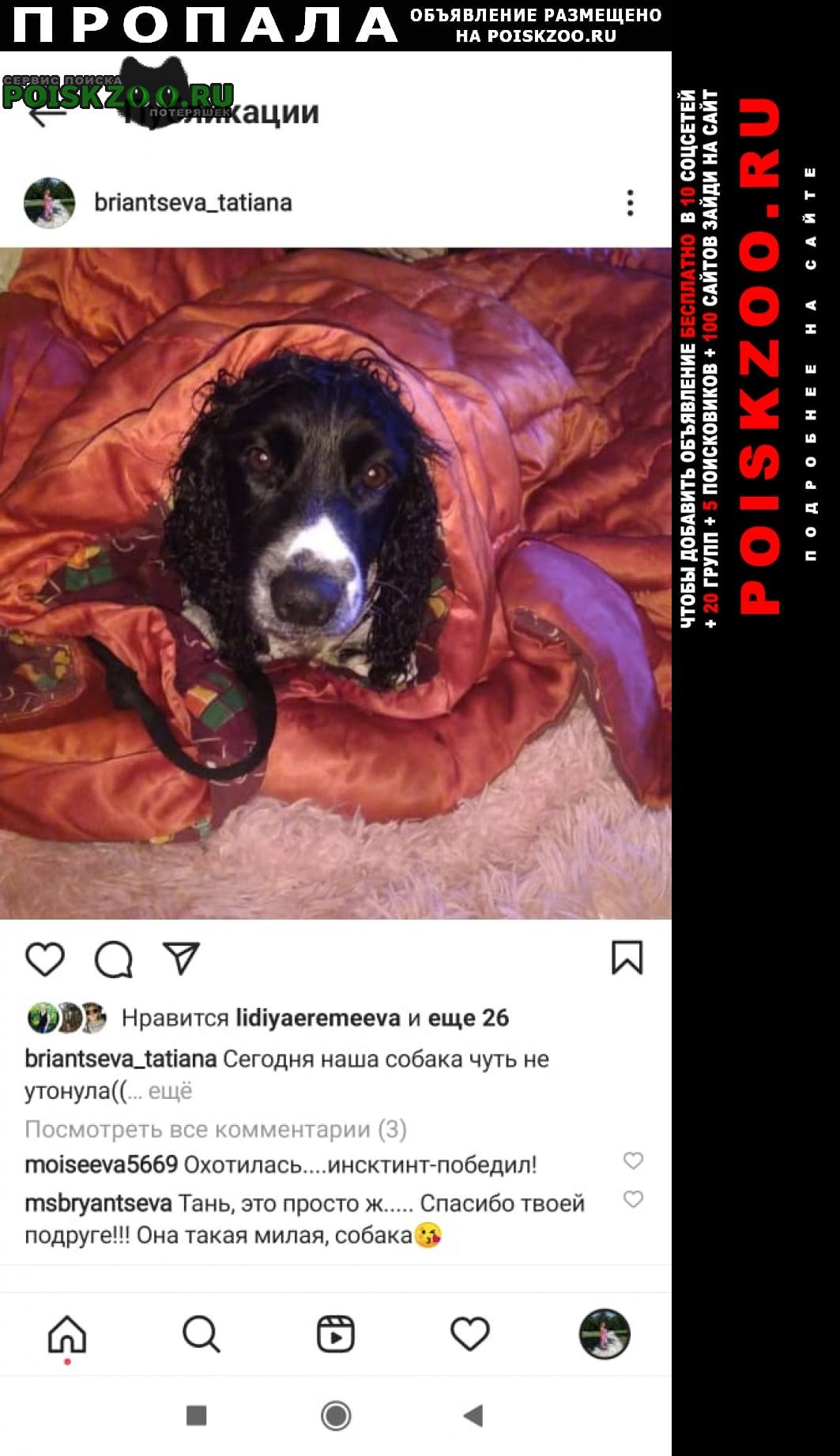 Пропала собака Анапа