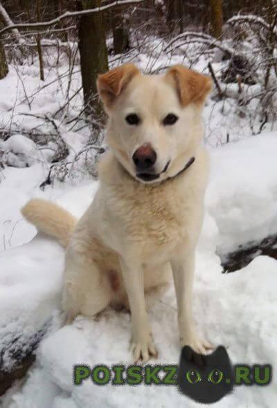 Пропала собака помогите найти собаку г.Щелково