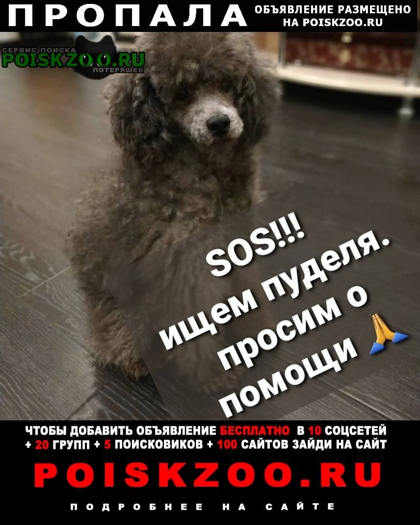 Пропала собака кобель просим помощи Ярославль