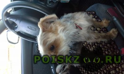 Пропала собака кобель голубой ошейник на нем г.Подольск