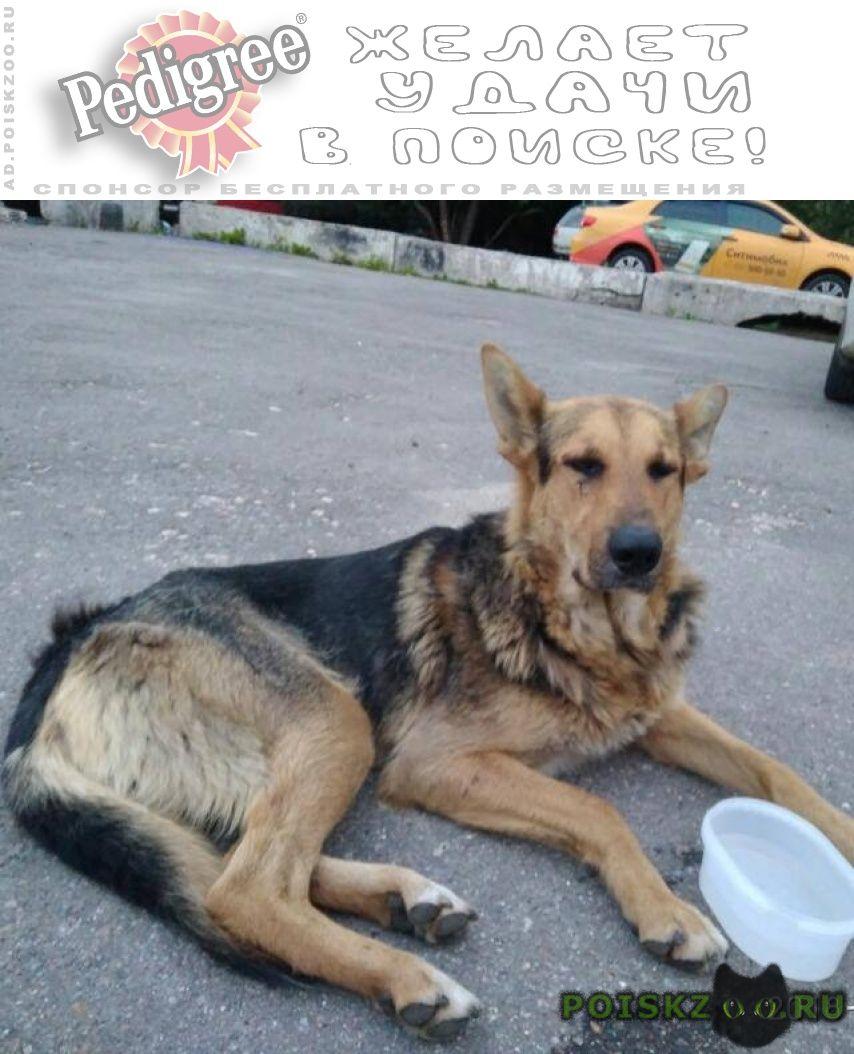 Пропала собака кобель метис овчарки г.Москва